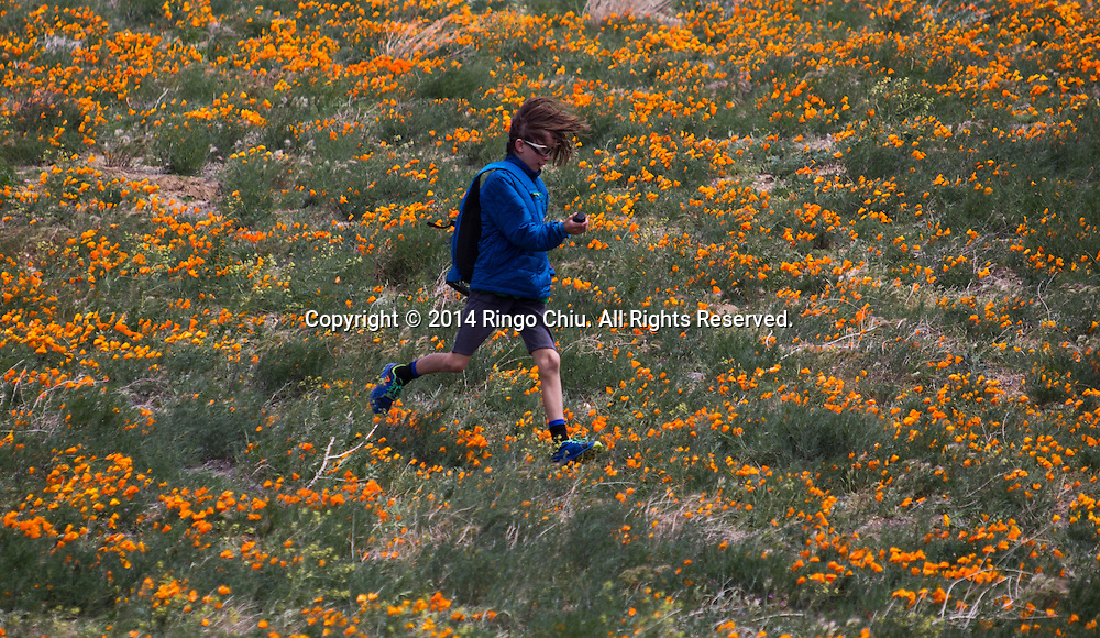 A boy runs through a field of poppies near Antelope Valley in Lancaster, California, Sunday, April 27, 2014. The California poppy is the state flower. Wildflowers are showing up in massive quantities throughout desert areas in Southern California because of recent rains. (Photo by Ringo Chiu/PHOTOFORMULA.com)