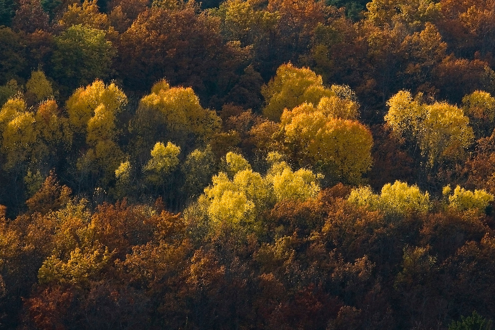 Trees with autumn colors