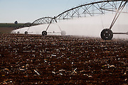 Patrocinio_MG, Brasil...Irrigacao de plantacao de feijao em Patrocinio, Minas Gerais...The irrigation of dry beans in Patrocinio, Minas Gerais...Foto: LEO DRUMOND / NITRO