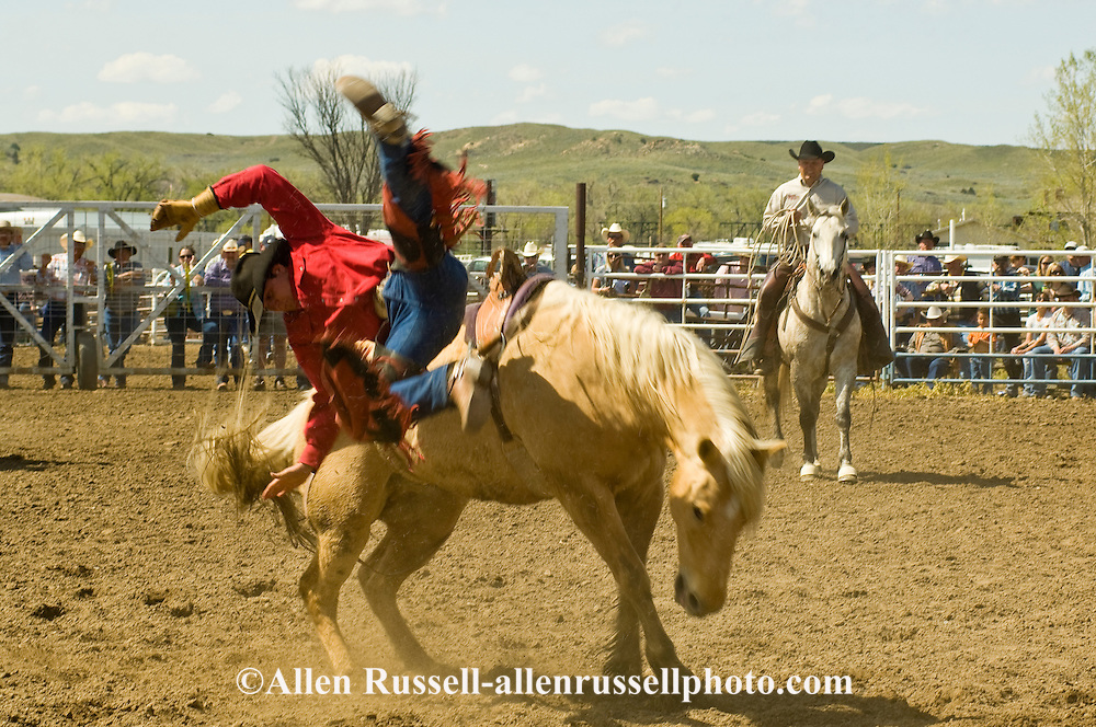 Rodeo, Saddle Bronc rider bucked off, Miles City Bucking Horse Sale, Montana, <br /> MODEL RELEASED on rider &amp; pickup man