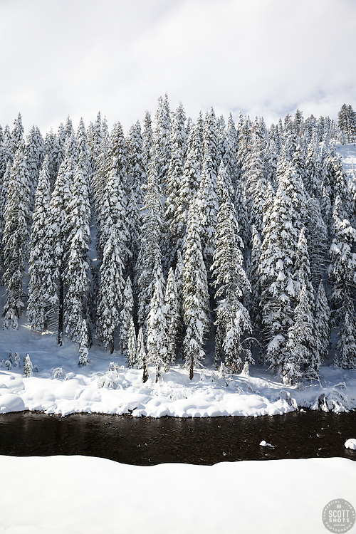 """Snowy Truckee River 9"" - Photograph of snow covered trees along the Truckee River in California."