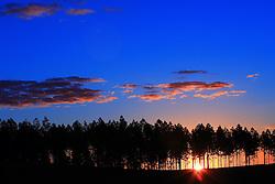 Pôr-do-sol por tras dos eucaliptos nos campos de Encruzilhada do Sul. FOTO: Jefferson Bernardes/Preview.com