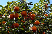 Seville Spain.<br />