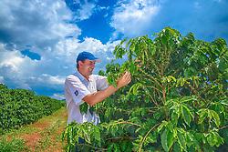 Trabalhador em plantação de café na área rural de Uberaba, Minas Gerais. FOTO: Jefferson Bernardes/Agência Preview