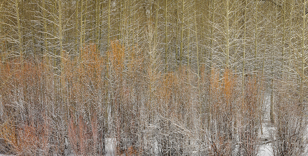 Winter Trees, near Sun Valley Idaho<br />