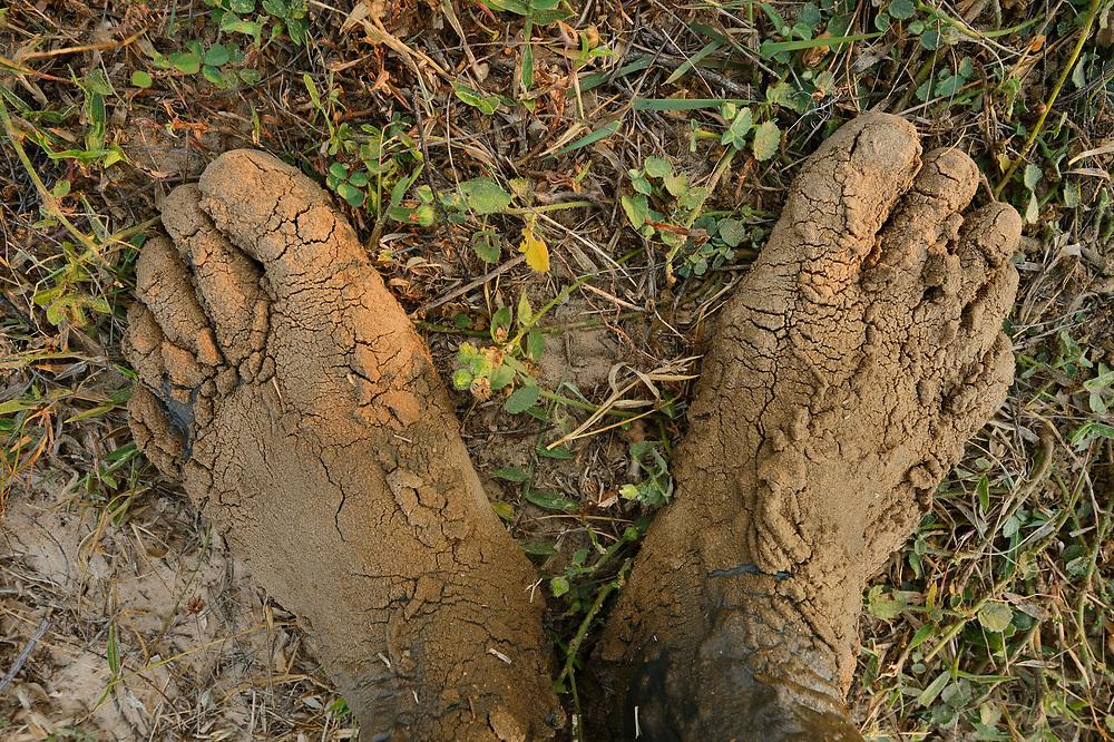 Muddy photographers feet, Pulicat Lake, Tamil Nadu, India