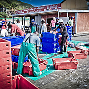 Fresh Fish getting sorted in Hout Bay, Cape Town area, South Africa.