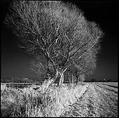 West Thorpe (Infrared Film) 2013