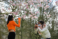 © Licensed to London News Pictures. 11/03/2020. London, UK. Women are seen under the Cherry tree in St James's Park as it starts to bloom. Photo credit: Dinendra Haria/LNP