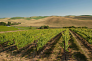 Spring Valley Vineyard, Walla Walla, Washington