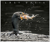 """NEW BOOK:  """"Last Oasis: Revisiting Union Bay"""""""