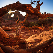 A fallen pinyon pine trunk highlights sandstone arche formations in Arches National Park near Moab, Utah.