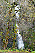 Horsetail Falls on Horsetail Creek, along Historic Columbia River Highway, Columbia River Gorge National Scenic Area, Oregon, USA.