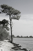 Tree Silhouette in Black and White at Assateague Island National Seashore, Maryland
