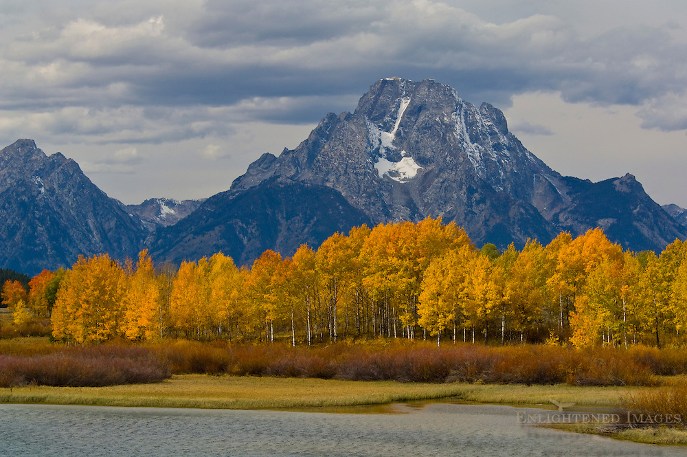 Golden Aspen trees in autumn below Mount Moran, at Oxbow Bend, Grand Teton National Park, Wyoming