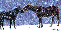 Horses playing in the snow in Ohio