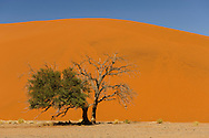 a classic view of Dune 45, near Sossusvlei, Namib-Naukluft Park, Namibia