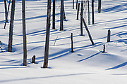 Tree  and shadows on snow in wetland<br />