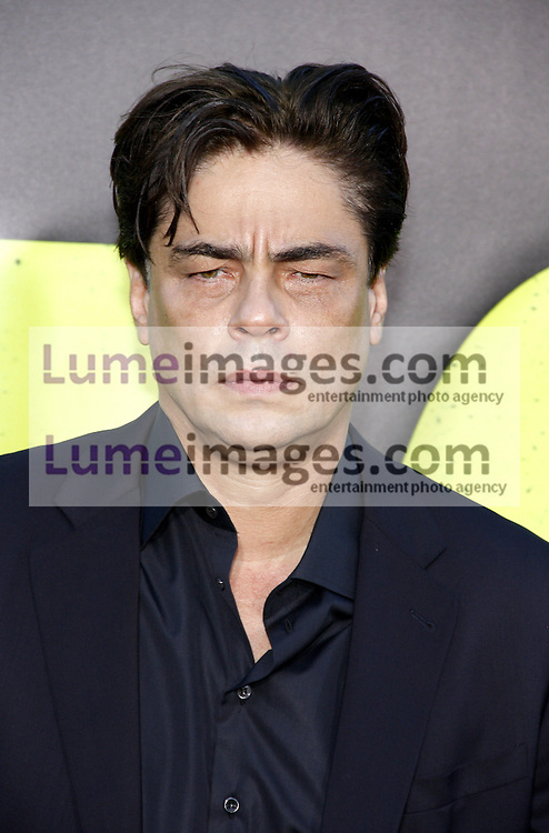 "Benicio Del Toro at the Los Angeles premiere of 'Savages"" held at the Mann Village Theatre in Westwood on June 25, 2012. Credit: Lumeimages.com"