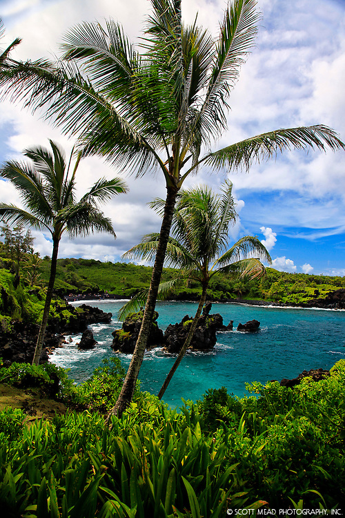 Palm Trees in Waianapanapa Park, with Black Sand Beach, Hana, Maui, Image of Waialeale waterfall, Kauai, Hawaii