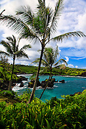 Palm Trees in Waianapanapa Park, with Black Sand Beach, Hana, Maui, Image of Waialeale waterfall, Kauai, Hawaii