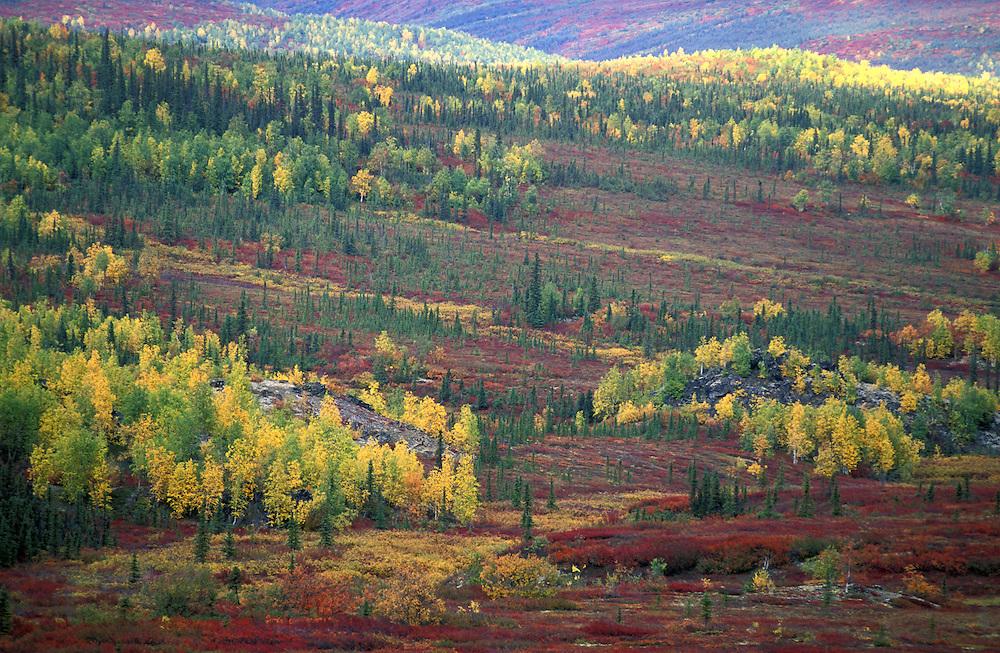 Fall Foliage along Dalton Highway near Finger Mountain, Alaska, USA