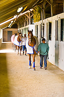 Exercising thoroughbred horses, Keeneland Race Course, Lexington, Kentucky USA