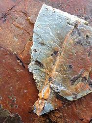 Rock Face Detail, Castine, Maine US