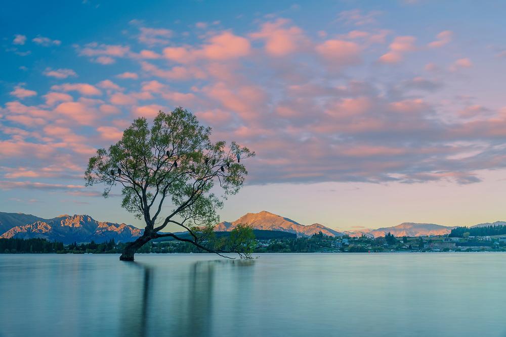 Oceania; New Zealand; Aotearoa; South Island; Otago, Wanaka,