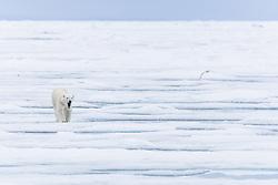 , Arctic - 7/17/2016 - (Photo by Shannon Wild/VWPics) *** Please Use Credit from Credit Field *** *** Please Use Credit from Credit Field ***
