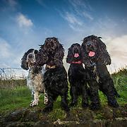Darcy, Poppy, Minnie and Barney
