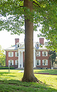 college green, Mapp Athens, summer, Tree Tour, Shingle Oak