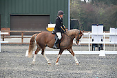 21 - 30th Oct - Dressage