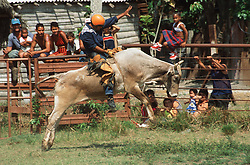 Rodeo in Cuba; with man on horseback being bucked by horse,