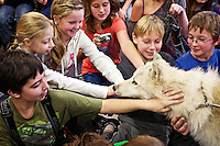 Christopher McBride, left, Olivia Wilson, Kate Jacobsen, Sarah Smith, Jordan White and Braden Daly pet a curious 6-month-old Arctic Wolf during a class presentation Monday at Dalton Elementary by the Wolf People.