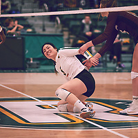 3rd year setter, Satomi Togawa (5) of the Regina Cougars during the Women's Volleyball home game on Fri Jan 25 at Centre for Kinesiology, Health & Sport. Credit: Arthur Ward/Arthur Images