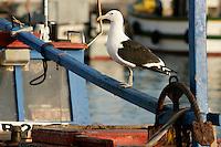 Kalk Bay/Simonstown Generic Photos, Cape Town South Africa Kalk Bay/Simonstown Harbour, Cape Town South Africa