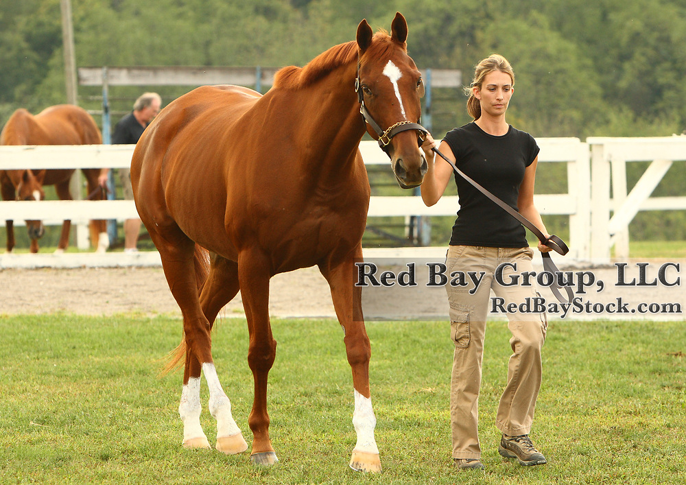 Christina Reppert and Ruling Storm at the First Annual Bourbon County Secretariat Festival in Paris, Kentucky