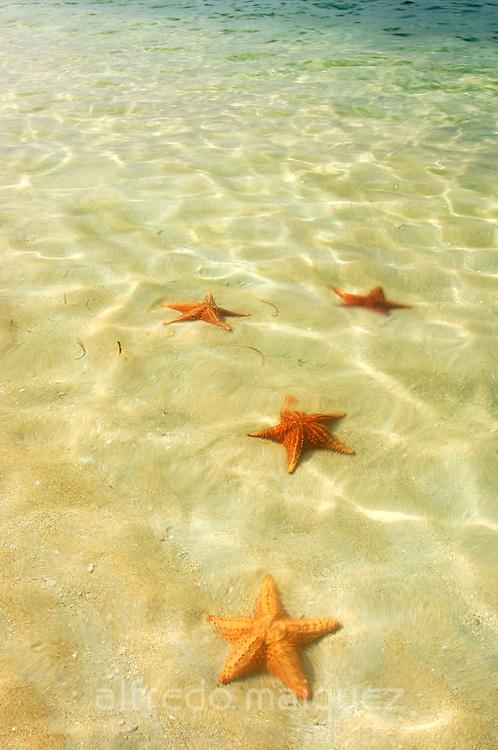 Star Beach at Bocas del Toro Province,Panama C.A.