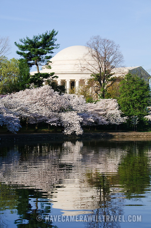 Jefferson Memorial and some of the 3700 Cherry Blossom trees blooming in early spring around the Tidal Basin next to Washington's National Mall