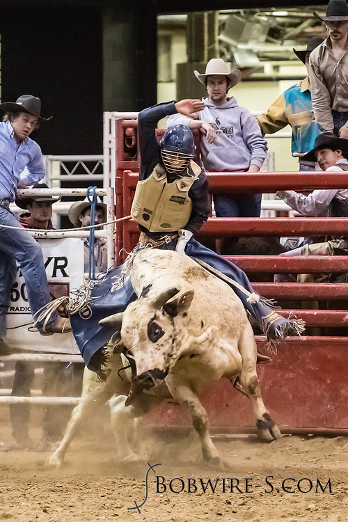 Bull rider Chase Dougherty rides Bailey Rodeo's 220 White Out in the first go of the Bismarck Rodeo on Friday, Feb. 2, 2018. He had an 84 on the ride.