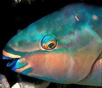 Great Barrier Reef, Australia, coral reef, reef fish, aerial, tropic
