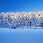 Silent Moments of Winter