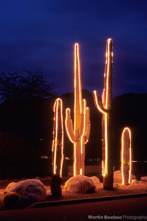 Saguaro (Carnegiea gigantea) lit up for Christmas, Tucson, Arizona