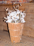 basket of cotton stalks; cotton on ends; crop; Shirley Plantation; Charles City; VA; Virginia