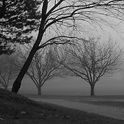 """""""Where the Paths Meet"""" B&W <br /> <br /> Beautiful fog covered landscape!! Trees surrounded in fog, along paths!!<br /> <br /> All About Fog by Rachel Cohen"""