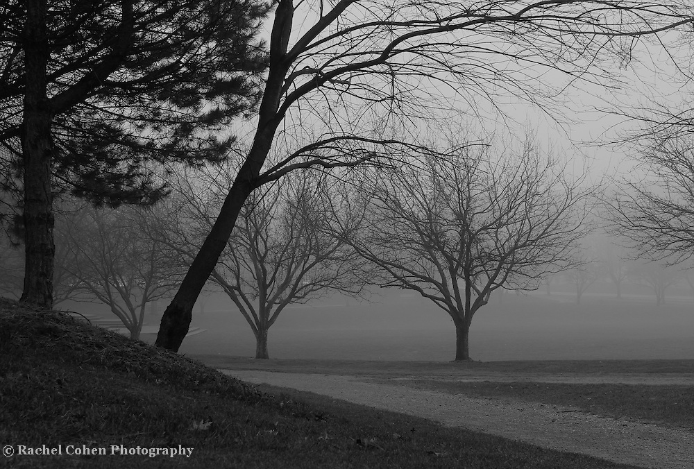 &quot;Where the Paths Meet&quot; B&amp;W <br /> <br /> Beautiful fog covered landscape!! Trees surrounded in fog, along paths!!<br /> <br /> All About Fog by Rachel Cohen