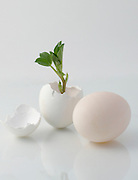 Just born (white)