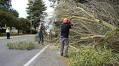 Hastings-Wind causes tree damage in Hawkes Bay