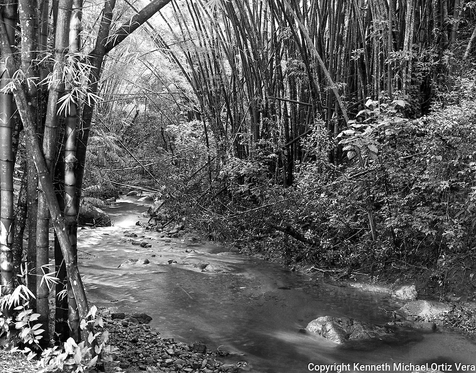 "This photo was taken in the National Rain forest of Puerto Rico called ""El Yunque""."